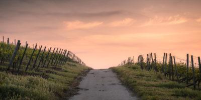A path between fences
